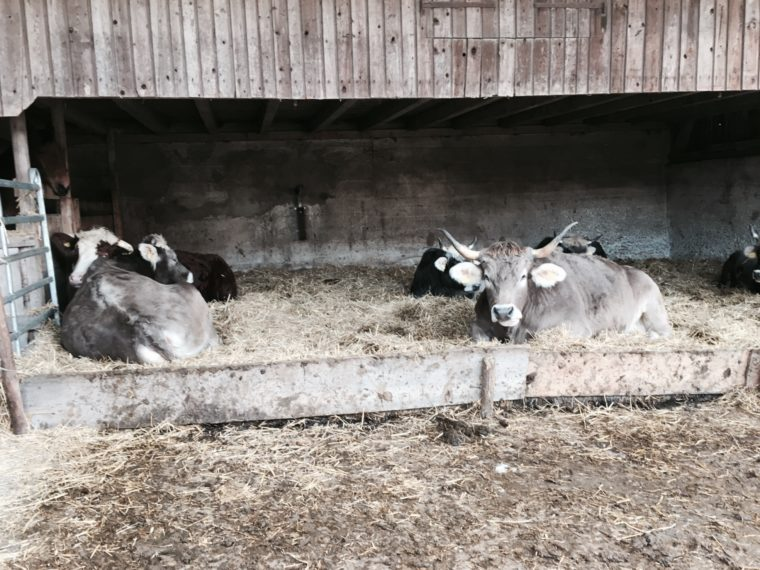 La ferme pour animaux rescapés du Seeland